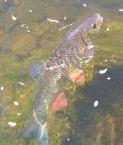 Mrk.cz - stále na rybách - ryby a rybaření