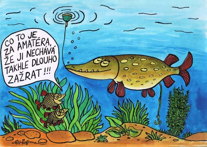 Ryby vtipy