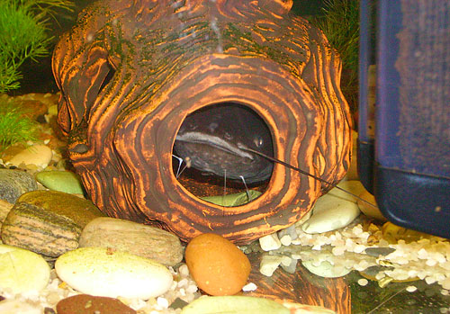 akvarium a sumec