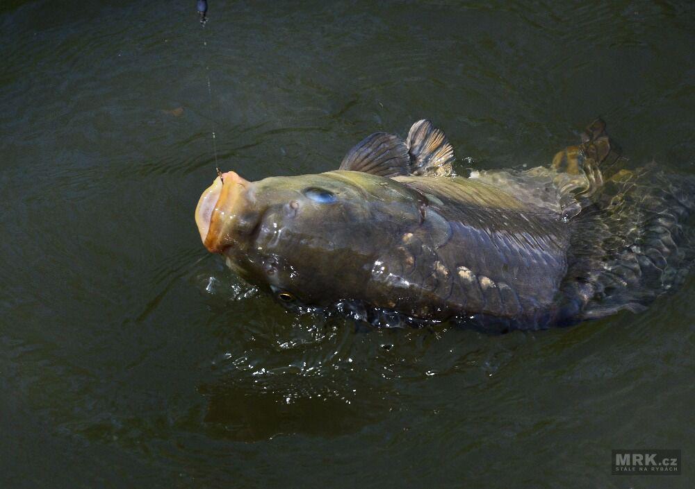 176612986c08 Některé ryby vyloženě náhodně